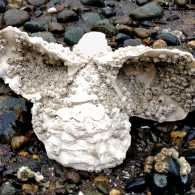 A cluster of oysters and barnacles in the shape of an angel