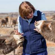 Carolyn gives two of her donkeys some tender loving care.