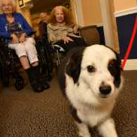 Jack the Comfort Dog Brings Joy to Seniors