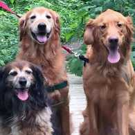 Labor Day Activities: Peggy Frezon's three pooch pals offer tips for having fun this holiday weekend.
