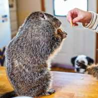 Molly Ryan feeds a couple of her furry friends.