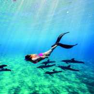 Alison Teal swimming with dolphins in Hawaii