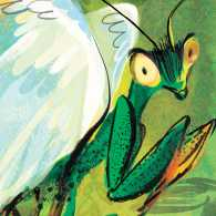 A praying mantis with wings; Illustration by Susan Gal