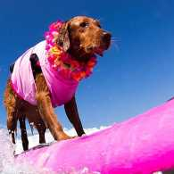 Guideposts: Ricochet the Surfing Dog