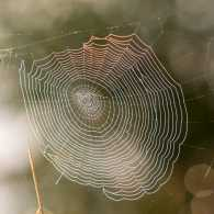 She Wove a Perfect Web