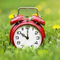 Alarm clock and dandelion flowers
