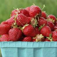 A bucket of strawberries gives a spiritual lesson in giving.