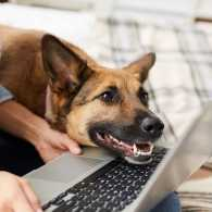 Dog smiles at a computer