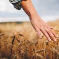 A close up of a woman walking through a wheat field.
