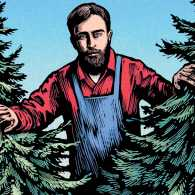 A giant woodsman's peeking through pine trees; Illustration by Chris Wormell