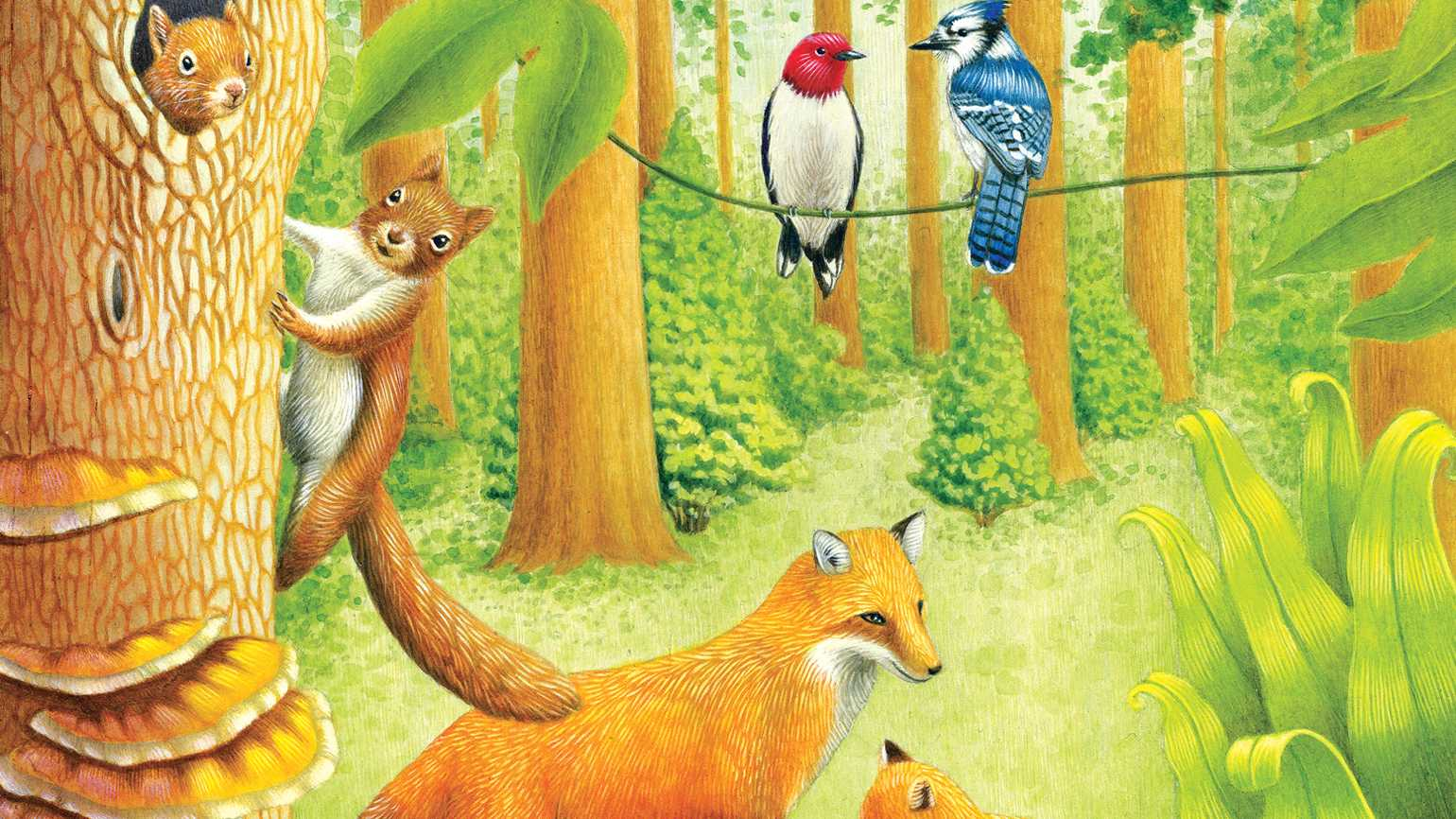 An illustration of foxes, birds and squirrels in a forest; Illustration by Sylvie Fong