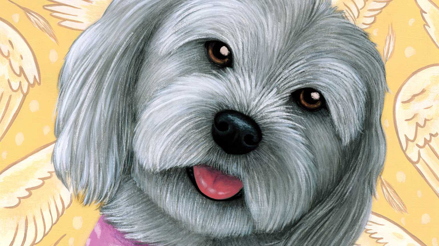 An artist's rendering of a friendly Havenese dog; Illustration by Kayla Reilly