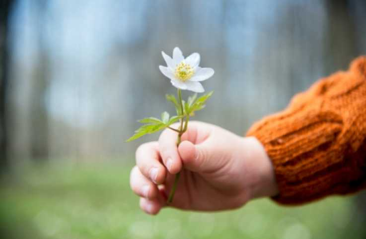 close-up of a child's hand offering a flower.