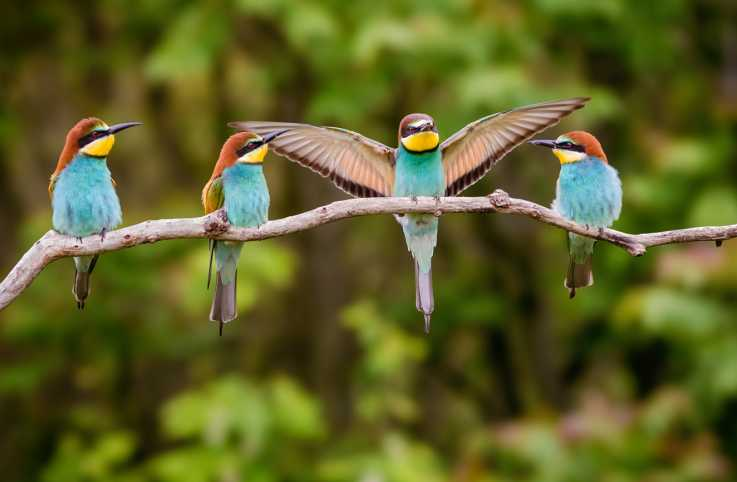 Four colorful birds on a branch; Getty Images