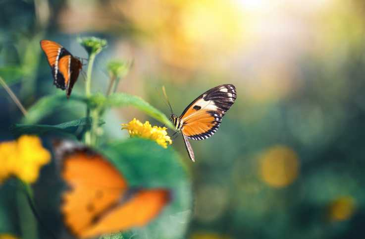 Butterflies; Getty Images
