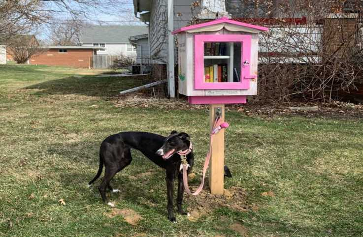 The Little Free Library for dogs, puppies and their owners; photo courtesy Carrie Noar