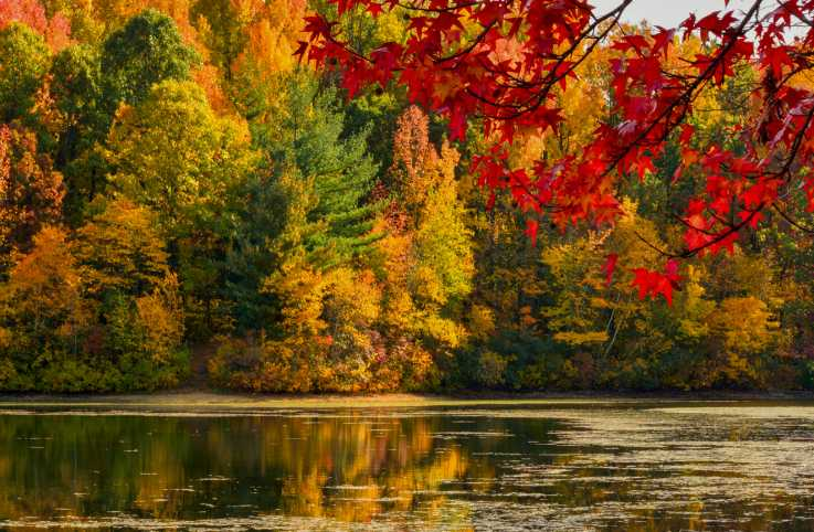 Colorful fall foliage scenery.