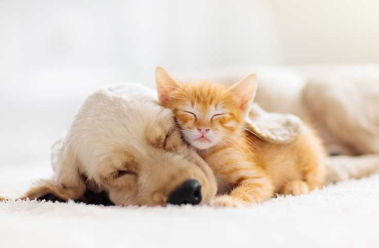 Sleeping dog and cat