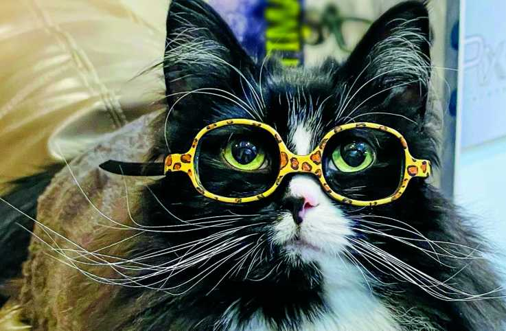 Truffles the cat wearing her statement frames