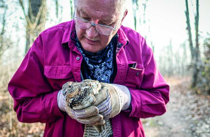 Bob Flach holds Lulu the ruffed grouse