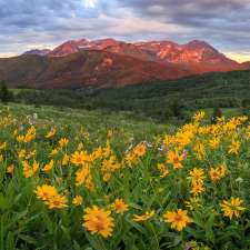 Flowers in a meadow, mountain in the distance