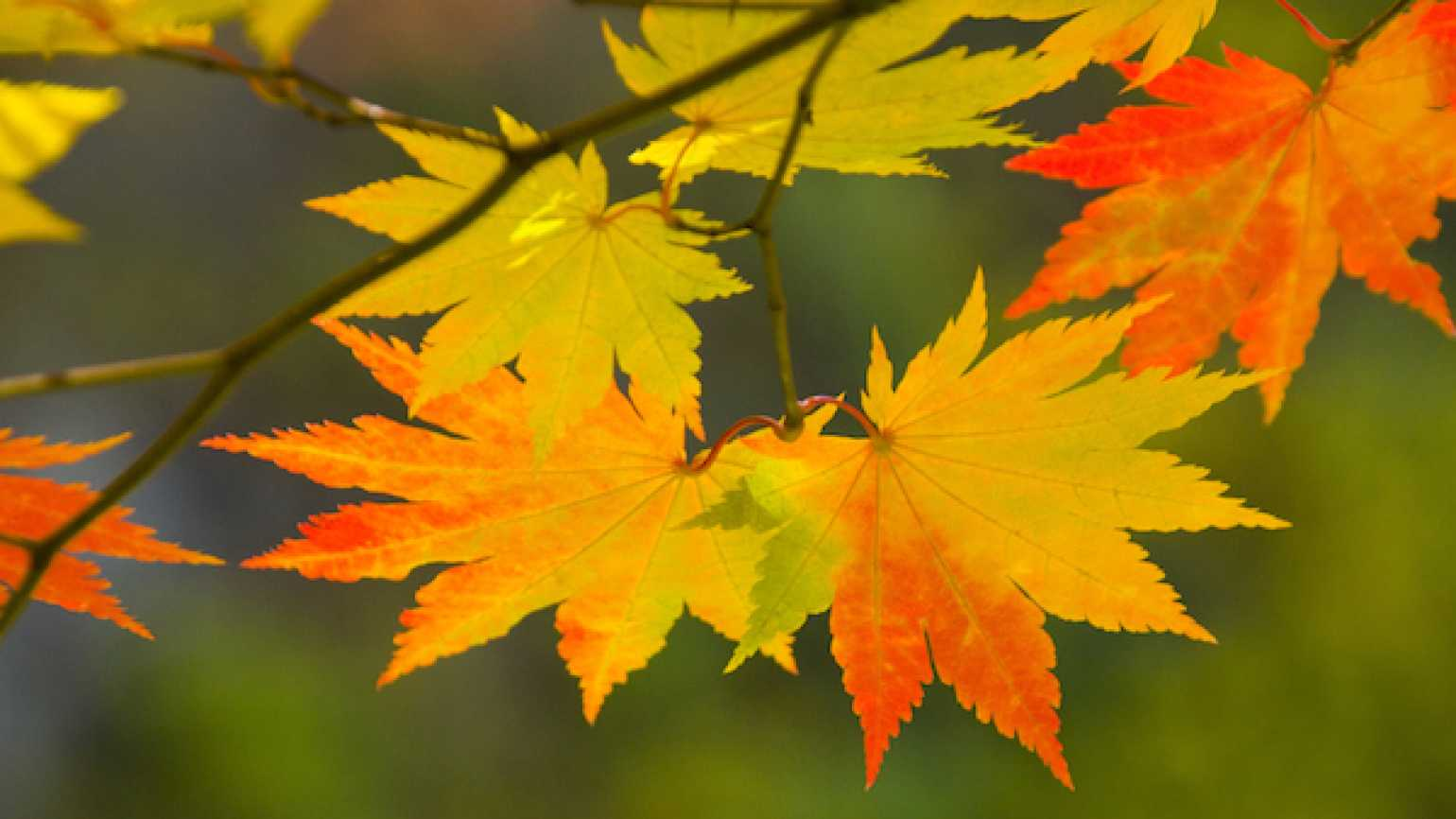 A prayer for autumn to slow down and appreciate the season.