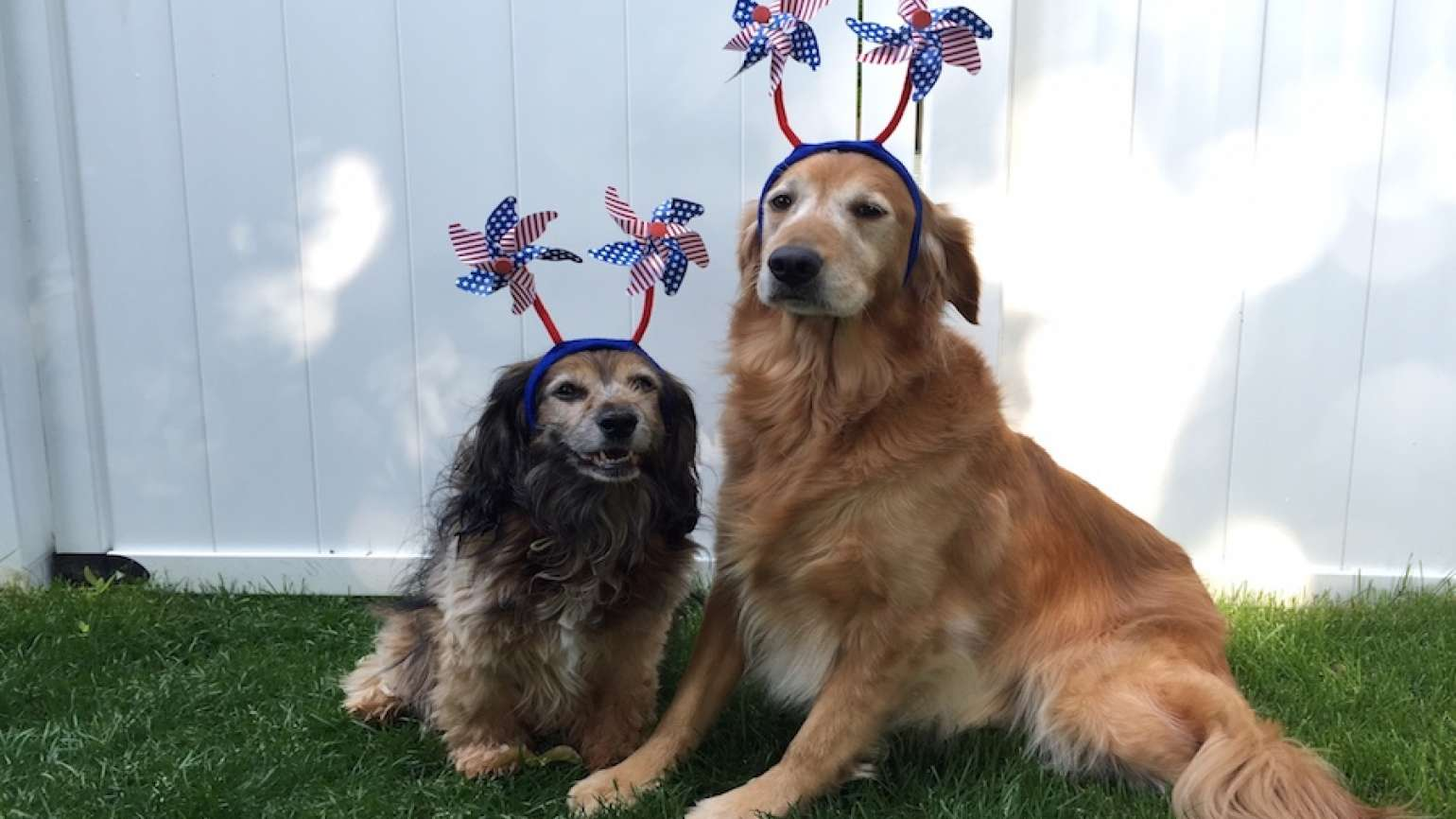 Two dogs who love the 4th of July fireworks!