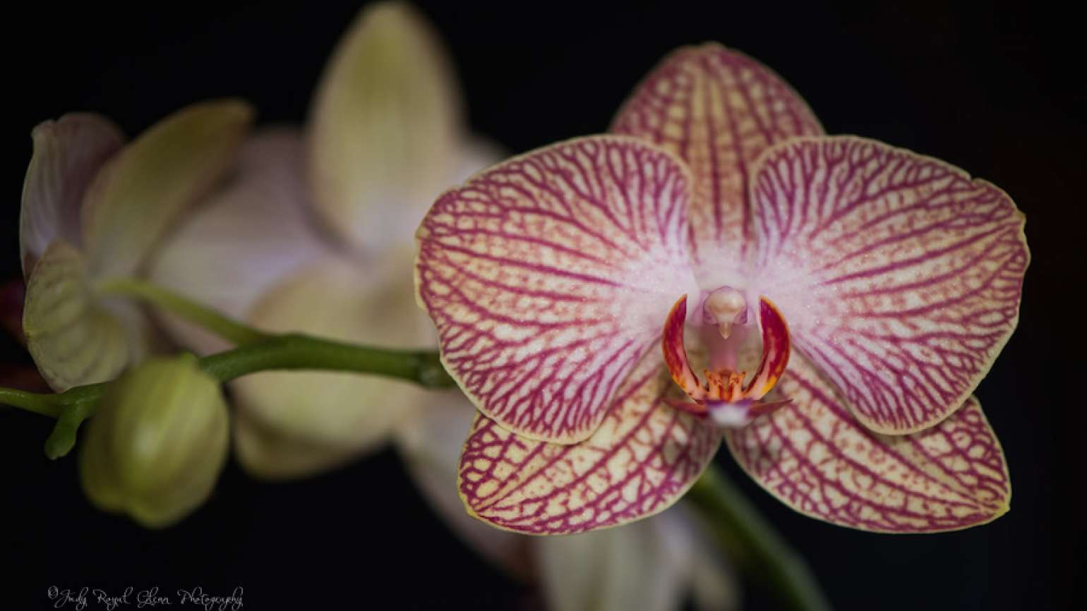 Guideposts: Orchid, Change a Destroyed Valentine's Day gift
