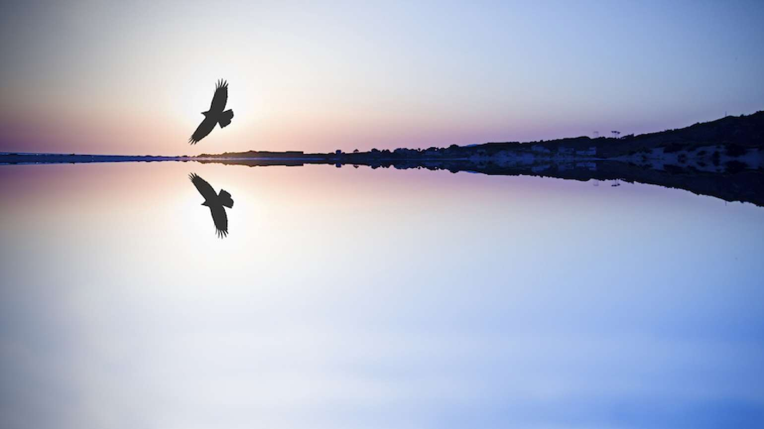 Bird soaring over a quiet lake. Photo: Thinkstock.