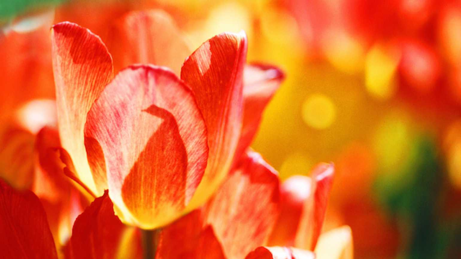 Spring is the time to rejoice in God's creation.