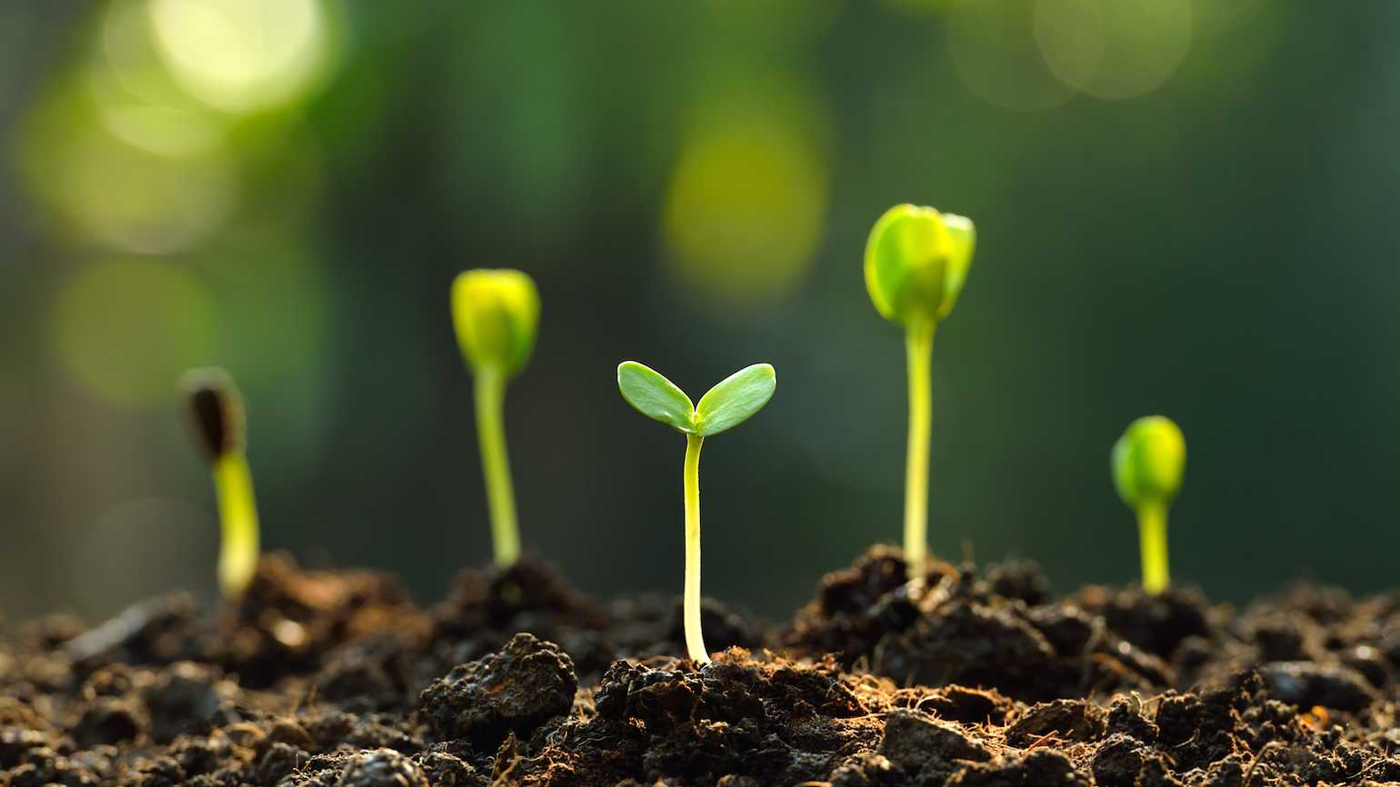 Plant prayers while you plant seeds.