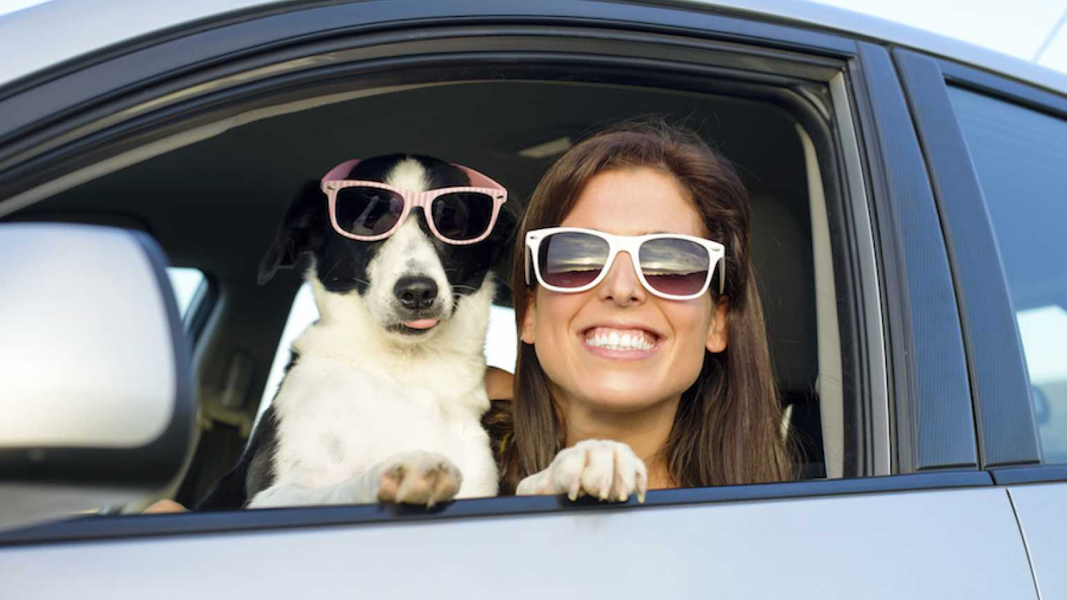 Take care of your pets on vacation.