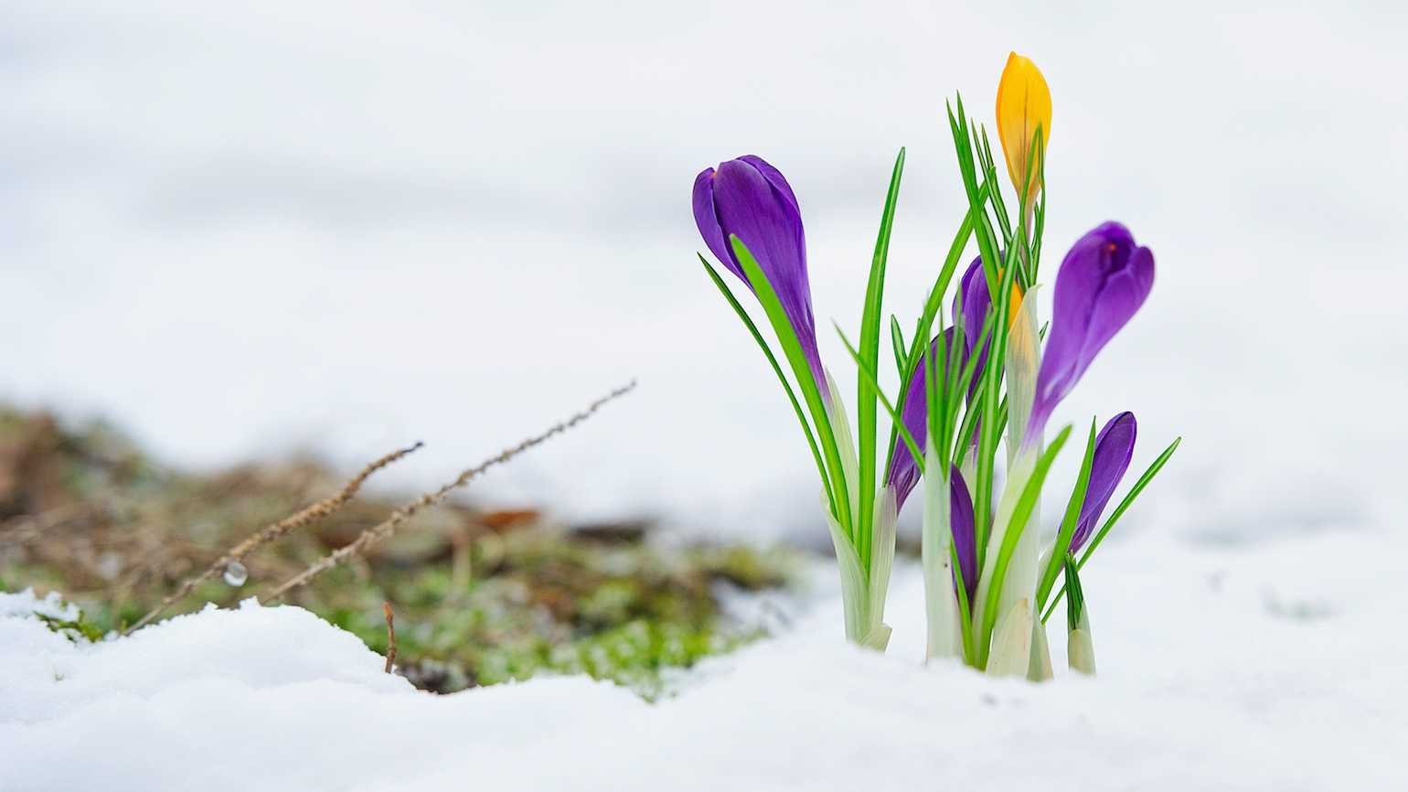 Yearning for spring