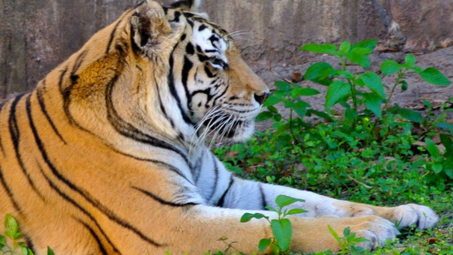 Outreach Ministries blogger Edie Melson's picture of a tiger in the grass