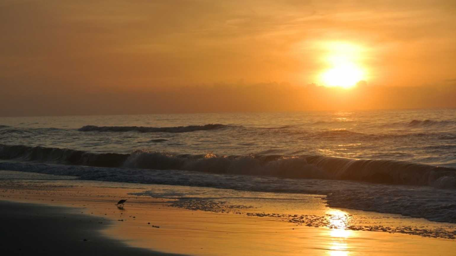 A beautiful sunrise at the beach with a bird in the waves
