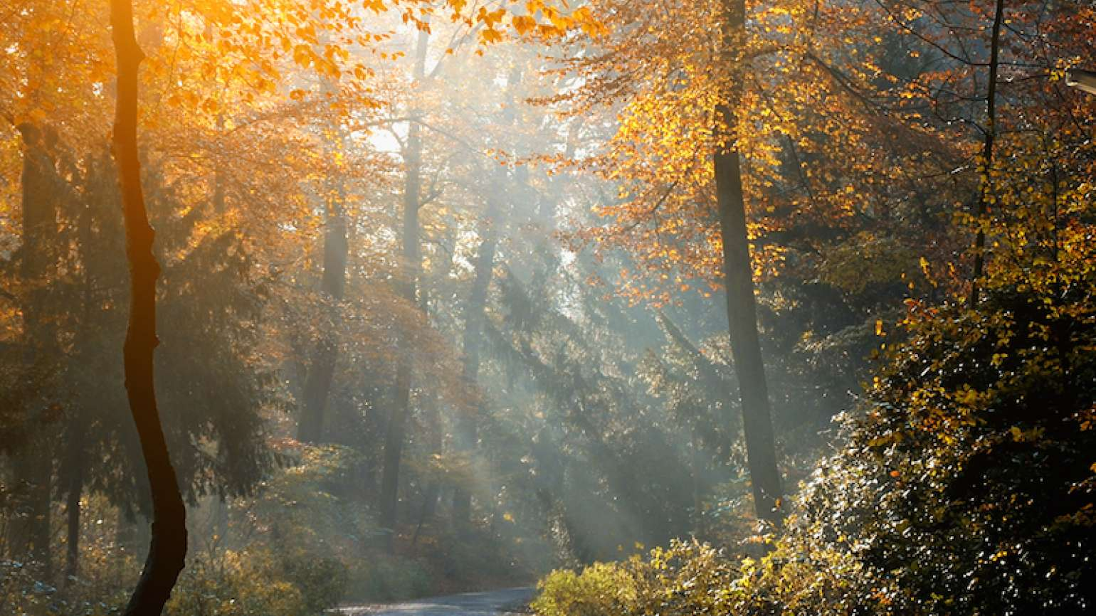 A scene filled with light. Photo by Balazs Kovacs Images for Shutterstock.