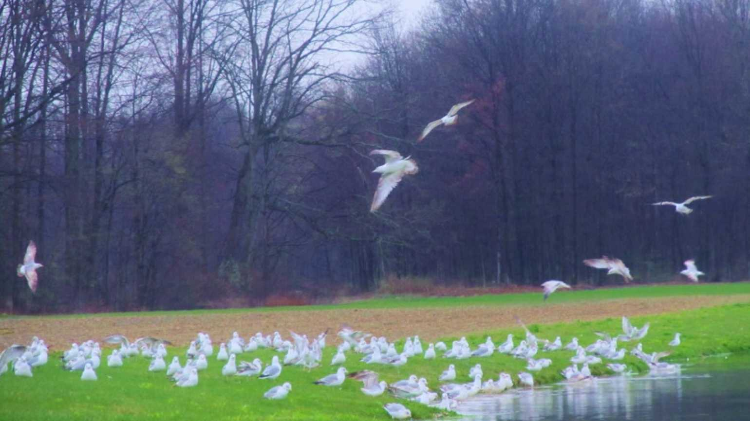 A flock of seagulls looking like angels on a rainy day