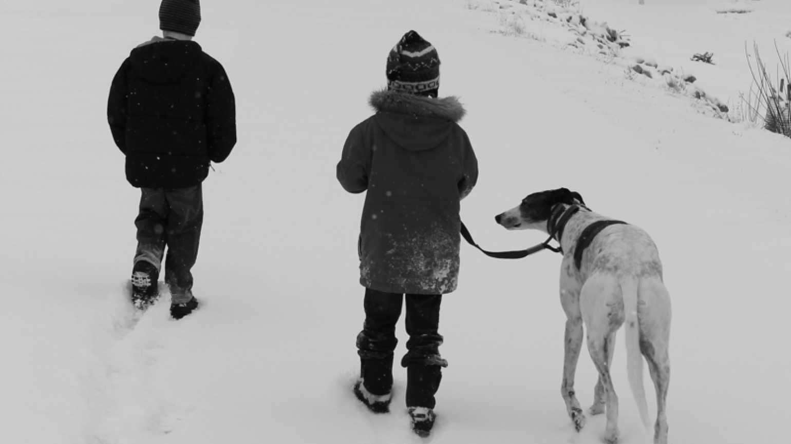 Stories of Faith blogger Shawnelle Eliasen's sons walking in the snow with dog