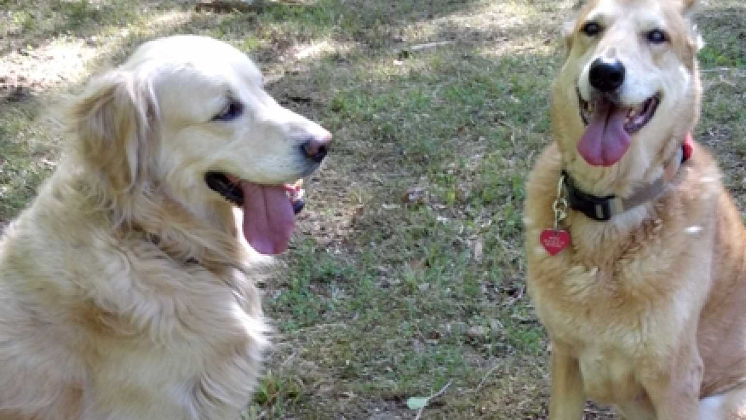 Two dog BFFs, Winky and Millie, in the woods together