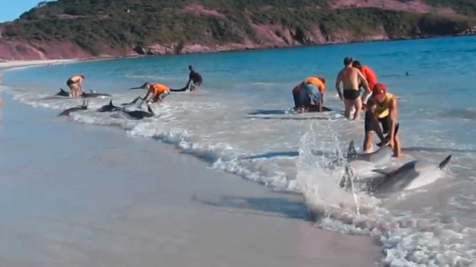 Beachgoers Rescue a Pod of Stranded Dolphins