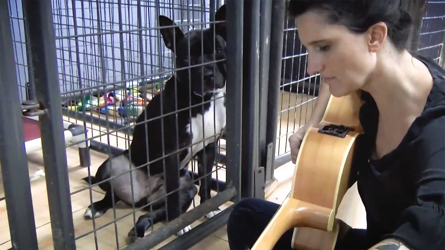 Kitty Snyder serenades shelter dogs and cats.