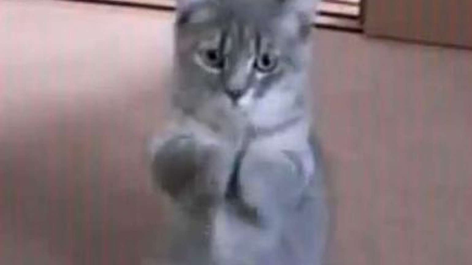 A kitten with paws posed in prayer