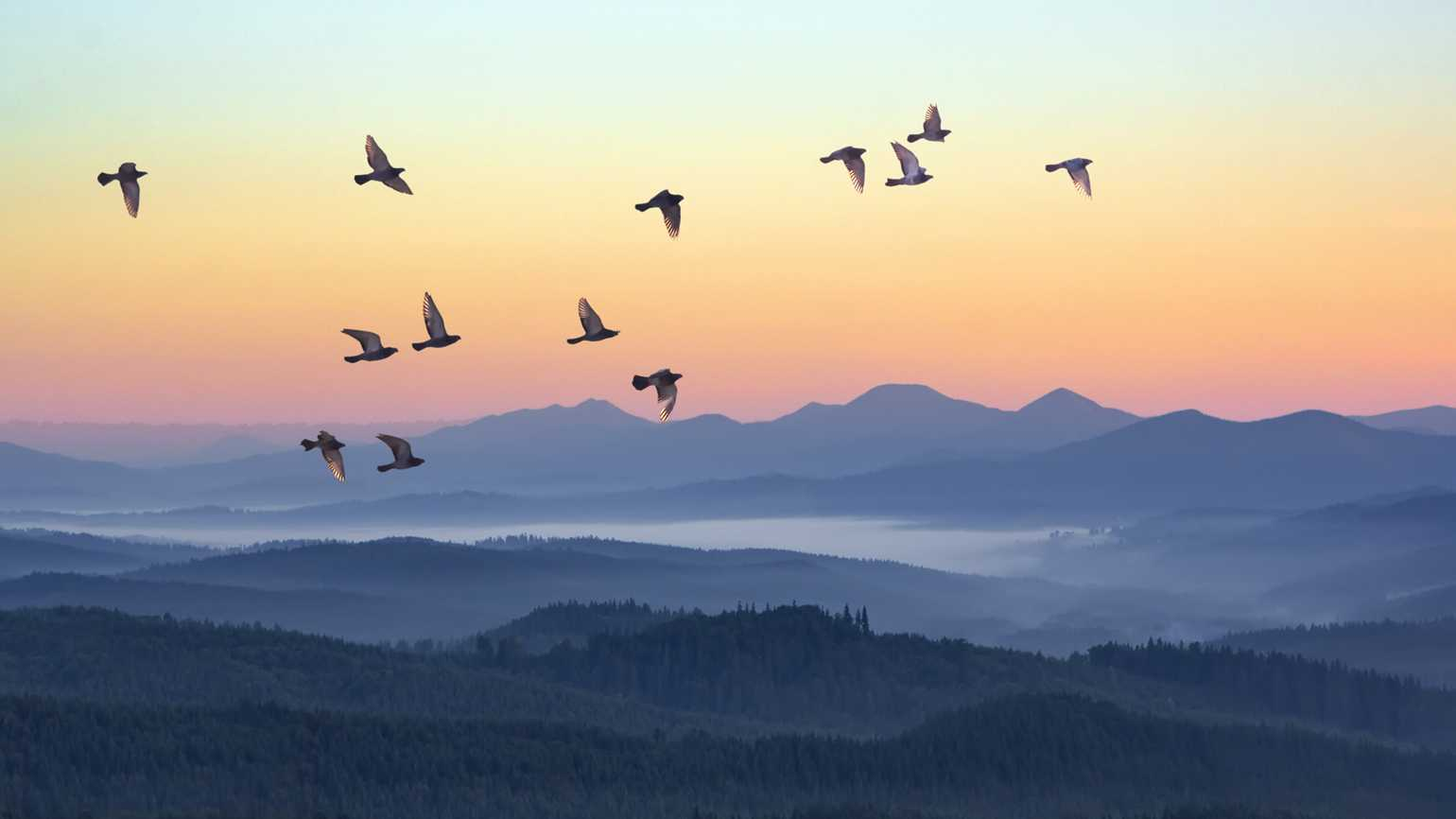 A flock of birds in flight during a sunset.