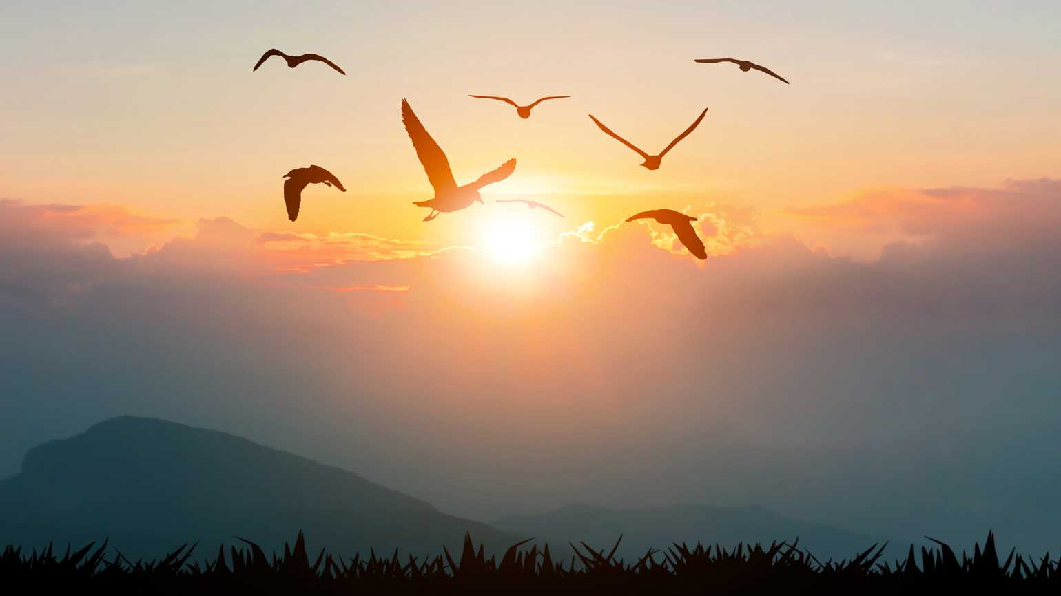 SIlouettes of birds flying during sunset.