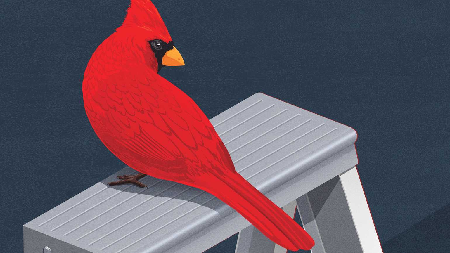 A Cardinal perched on top of a ladder; Illustration by Michael Glenwood