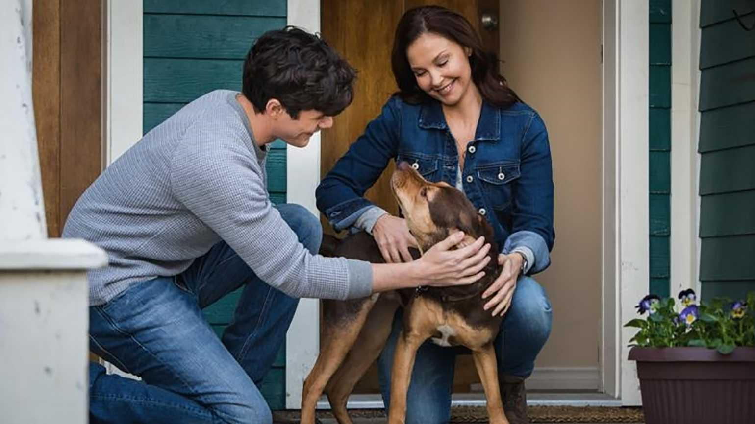 Ashley Judd in A Dogs Way Home