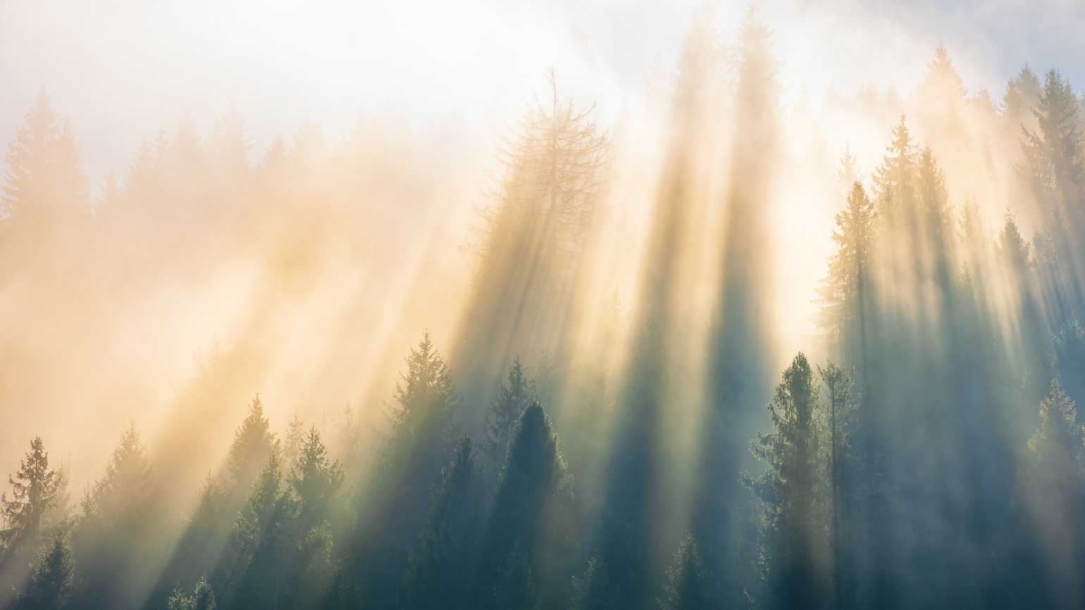 Sunlight shining through tree tops.
