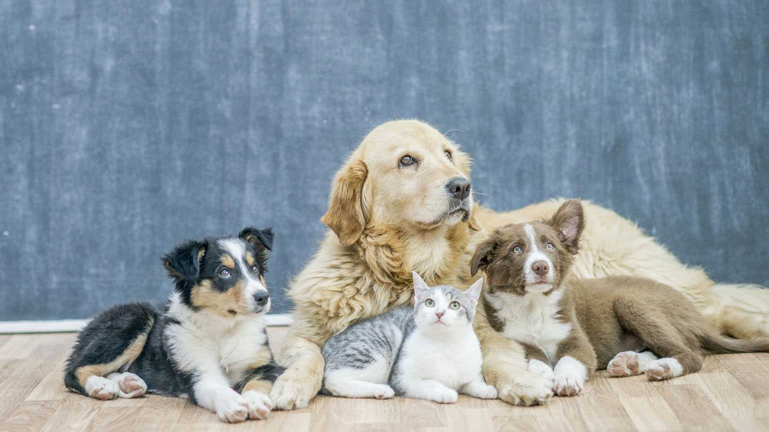 A group photo of three different breeds of dogs and a cat together.