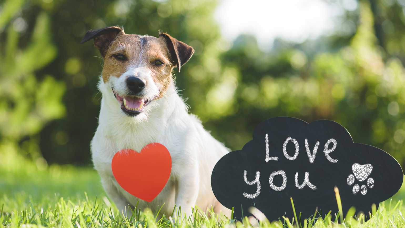 A happy Valentine's Day dog with a heart along with a sign that says 'Love You'.