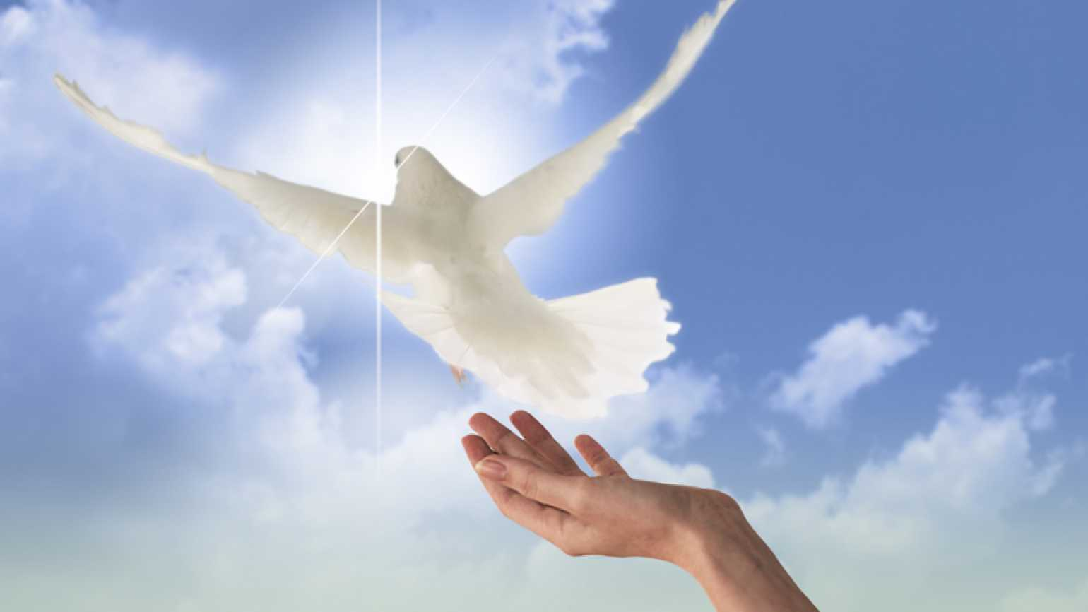 A hand releases a dove representing how to forgive when a loved one leaves, The Power of Forgivenss